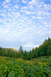 Forest scenery. Green tree, blue sky and white cloud Stock Photography