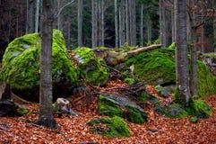 Forest Scenery immagine stock libera da diritti