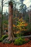 Forest Scenery fotografia stock libera da diritti