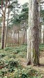 Forest Scenery Royalty-vrije Stock Afbeeldingen