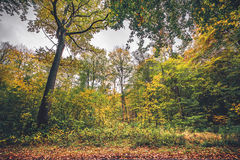 Forest scenery in the fall. In beautiful autumn colors with autumn leaves on colorful trees in the fall Royalty Free Stock Photography