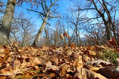 Forest Scenery Landscape Illinois Royaltyfri Bild