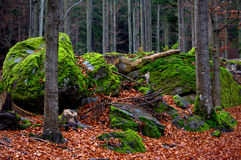 Forest scenery Royalty Free Stock Image