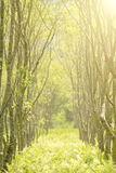 Forest scenery Royalty Free Stock Photo