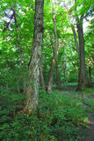 Forest Scenery in Shabbona Park Stock Photo