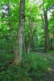 Forest Scenery in Shabbona Park Stock Photo