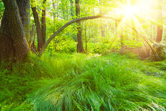 Forest scenery Stock Photography