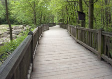 Forest scenery with wooden bridge Royalty Free Stock Photography