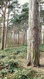 Forest scenery Royalty Free Stock Images