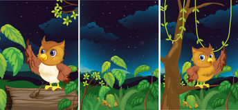 Forest scenes with cute owls. Illustration Stock Photography
