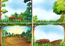 Forest scenes. Four scenes of forest at daytime Royalty Free Stock Images