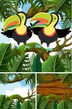 Forest scenes with toucan birds. Illustration Stock Image