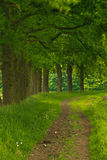 Forest Scenic Royalty Free Stock Image