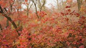 Forest Forest in schönem Autumn Arrangement stock footage