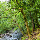 Forest in Scotland Royalty Free Stock Photography