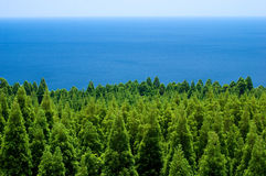 Forest and sea Stock Photo