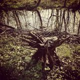 Forest by the sea. Artistic look in vintage old film colours. Royalty Free Stock Photography