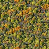 Forest seamless pattern. Stock Photo