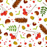 Forest seamless pattern of acorns, chestnuts, maple seeds, Rowan berry bunch with leaves, sugar pine cone on white background. Royalty Free Stock Images