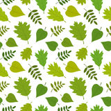 Forest seamless pattern with oak, rowan, lilac leaves. Vector set. Stock Photo