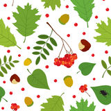 Forest seamless pattern with rowan berry, leaves, acorn, chestnut, beetle. Vector set. Royalty Free Stock Image