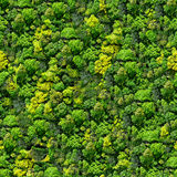 Forest seamless pattern - view from above. Stock Photo