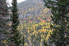 Forest Seasonal Change Arkivfoto