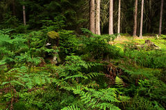 Forest seclusion. View of forest seclusion with fern Stock Images