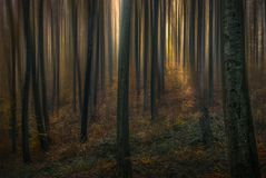 Tale forest I royalty free stock photo