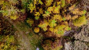 Forest seen from above. Beautiful, colorful woods in autumn. stock video footage