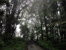 Forest. In semeru mountain Stock Photography