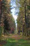 Forest in September. Colors of mixed forest in September Royalty Free Stock Photography
