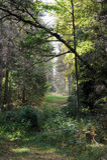 Forest in September Stock Photo