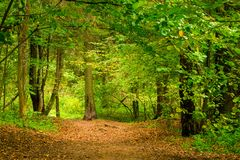 Forest in September, thick deciduous trees stand. Green royalty free stock images
