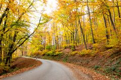 Forest serpentine road in autumn stock photos
