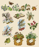 Forest set. Set of natural images painted in watercolors, ink and pastel in vintage manner Royalty Free Stock Images