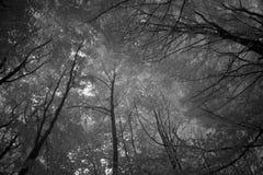 Forest set infrared light Stock Image