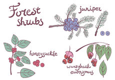 Forest set of wild shrubs Stock Photo