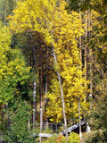 Forest shelter. Natural arc of trees above the stairs in the forest. And this is a golden autumn here Royalty Free Stock Images