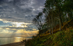 Forest and shore. A forest and a shore with rays of light. Polish Baltic coast Stock Photos