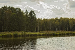 The forest on the shore of lake Stock Photography