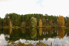 Forest on the shore of the lake with reflection. Autumn forest on the shore of the lake with reflection Royalty Free Stock Photo