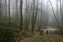 Forest shrouded in fog Royalty Free Stock Photography