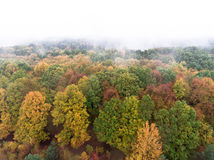 Forest shrouded in fog Royalty Free Stock Images