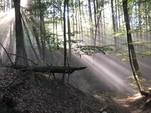 Forest shrouded in sunbeams at a sunny day, Germany royalty free stock image