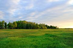 Forest in Siberia against a beautiful sunset. Forest in Siberia against a beautiful sunse royalty free stock photos