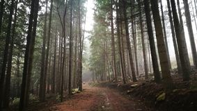 Forest in Sicily Stock Photography