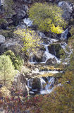 Forest in the Sierra de Cazorla Royalty Free Stock Photography