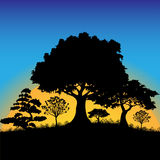 Forest silhouette Royalty Free Stock Photography
