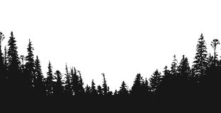 Forest silhouette backdrop. Forest silhouette.View to realistic trees.Vector monochrome version Royalty Free Stock Image